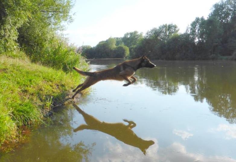 Schwimmen für Hunde am 31.07.2016