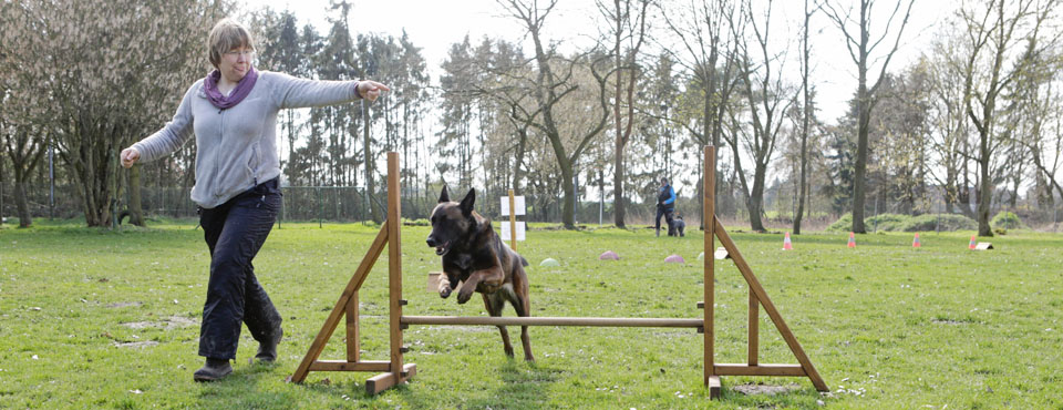 FUN-Agility (Winterbetrieb: Zirkeln)